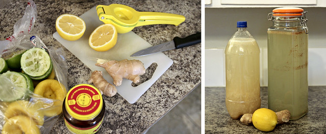 making fermented lemonade and ginger beer