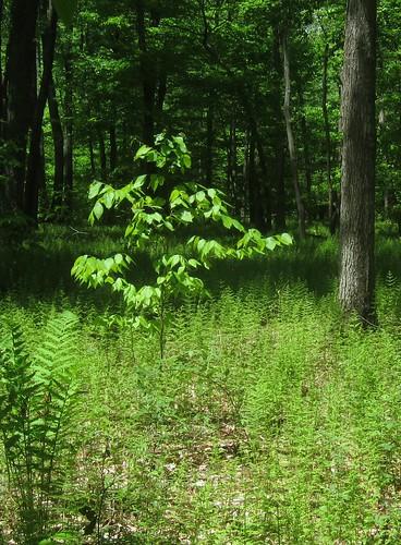 Ferns a-swooshing