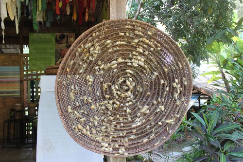 20120129_3012_silk-worm-cocoons