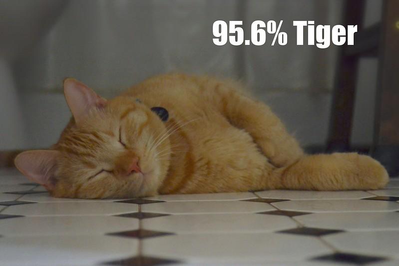 95.6% Tiger