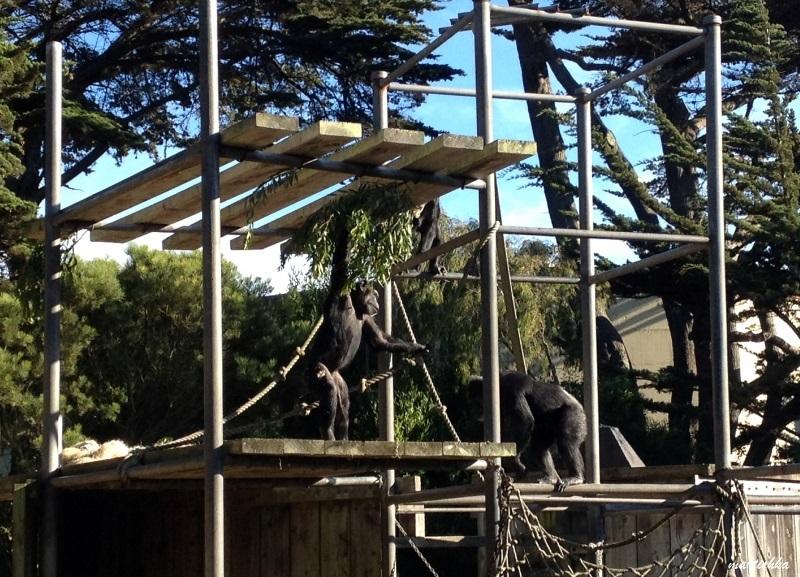 San Francisco Zoo (13)
