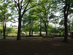 ごく普通の朝の石神井公園