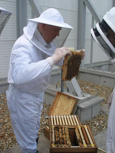 Exeter beekeeper