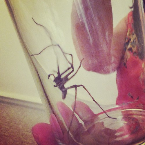 Monstrous house spider. You can live outside too.