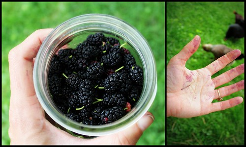 20130607. Mulberry.
