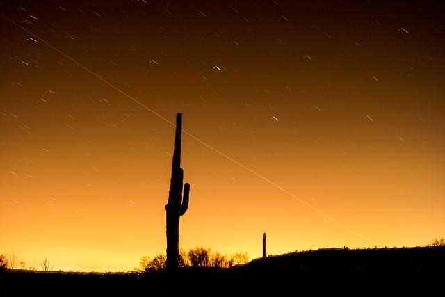 1306 Saguaro and Stars