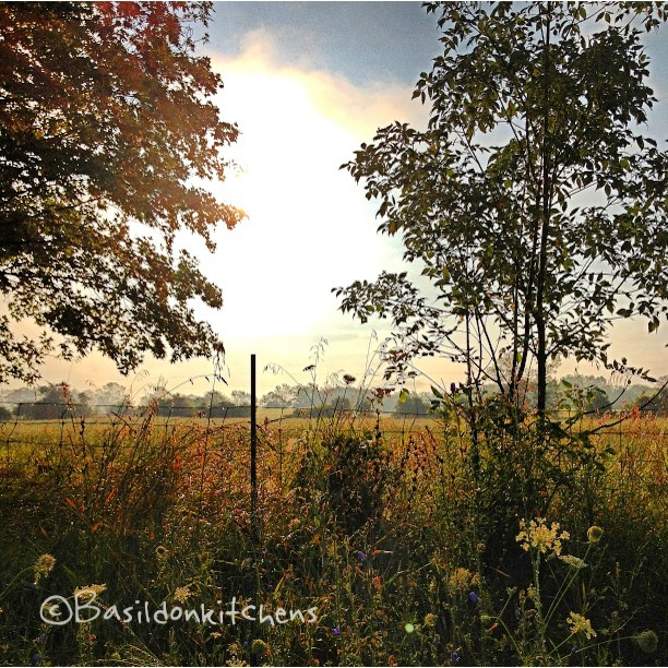 Aug 8 - peek-a-boo {this morning's sun is playing peek-a-boo with the last few remaining storm clouds}. I love sunrise after a storm! #fmsphotoaday #sunrise #princeedwardcounty #ctyrd1 #rural #meadow