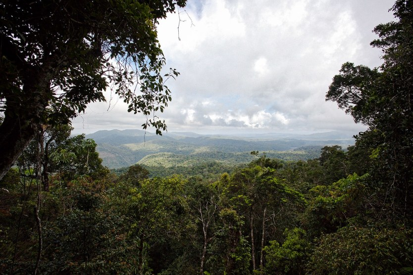Looking out over the rainforest from Red Peak Station.
