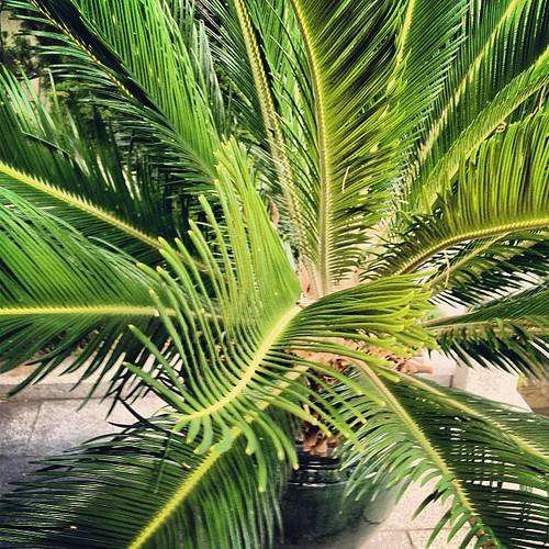 #palm by @MySoDotCom