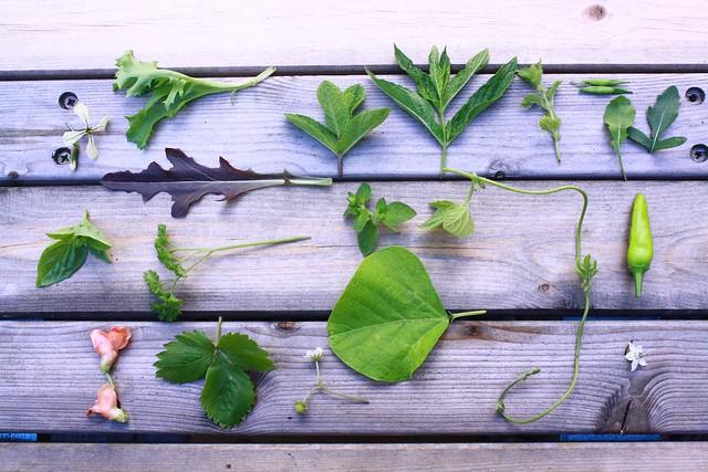 plant collection patio garden