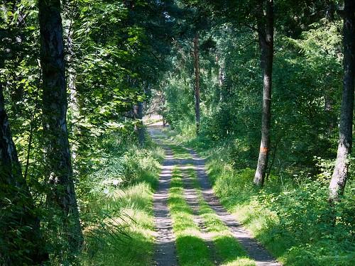 Ängleholm forest