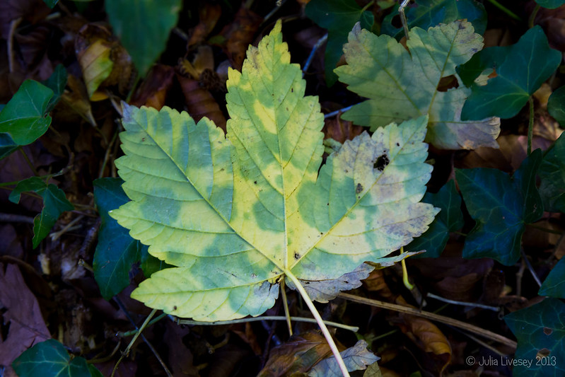 Mottled Leaf