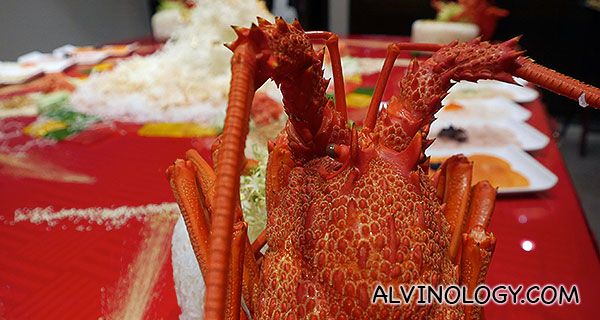 The lobster looks on...