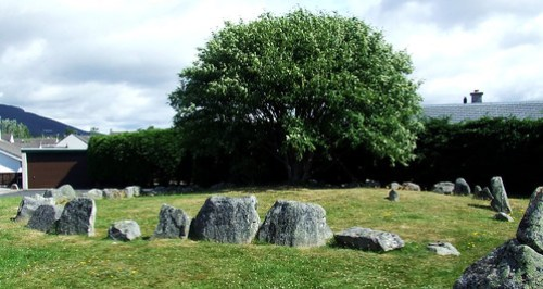 Aviemore ring cairn and stone circle rowan tree