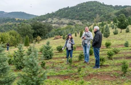 Christmas Tree Farm-2