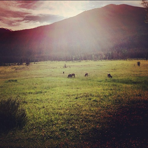 A few Elk out there by @MySoDotCom