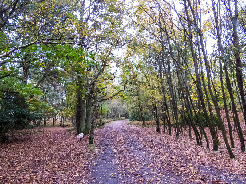 Longfleet Drive is starting to look really autumnal now