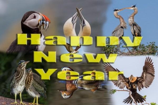 Happy NewYear to all my Flickr Buddies