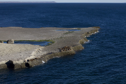 Puerto Piramides Sea Lions