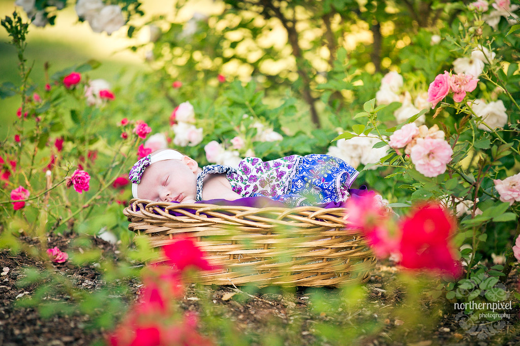Newborn Photography - Prince George BC