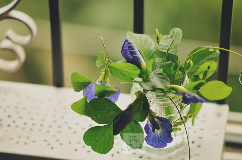 Day 207.365 – Blue Flower (a week of  Still Life with Flowers  - V)