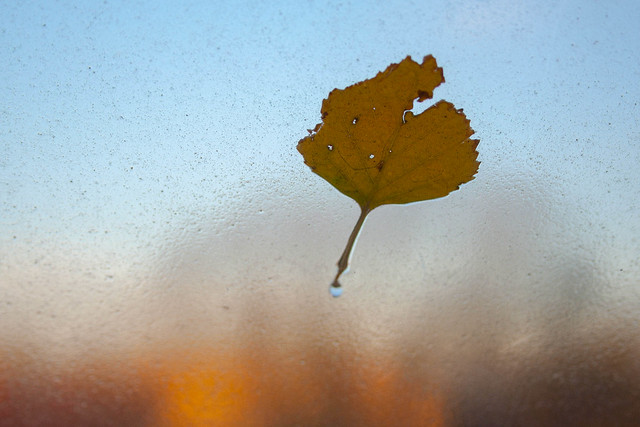 Piece of Autumn