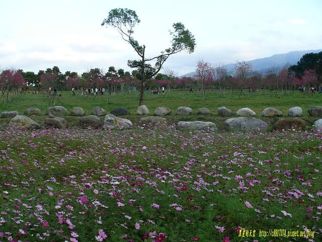 【宜蘭大同】不期而遇的櫻花祭 @ 黑皮的天空 :: 痞客邦