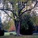 Poissy - Parc Messonier 11