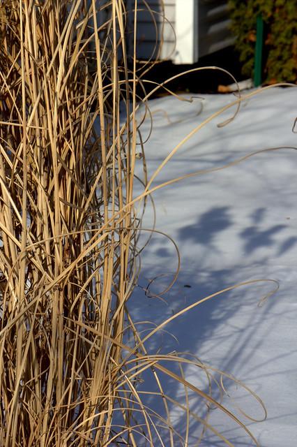 Garden 2014-01-04