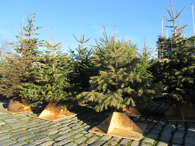 Second Chance - A temporary forest of recycled Christmas trees