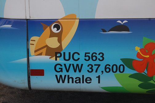 blue whale bus 1 detail
