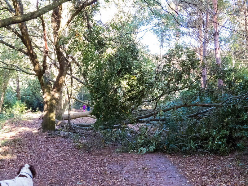 Tree down across the Redbrick Path