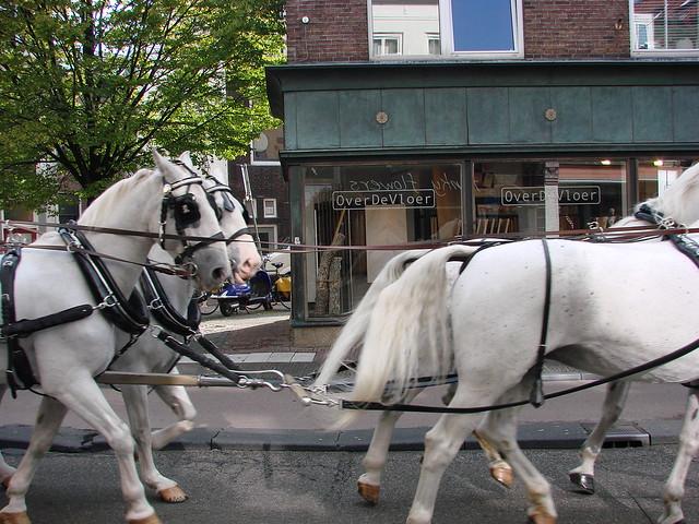 Fairytale on Voorstraat