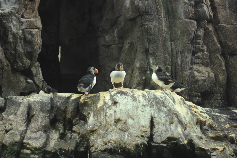 puffin conference