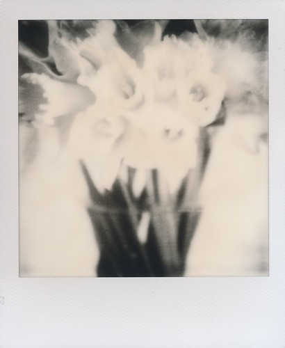 Daffodils - Impossible Project Instant Lab test unit