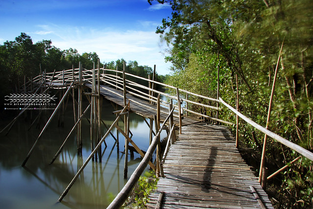Bamboo Bridge Bakhawan Eco-Park & Research Centre Kalibo Aklan