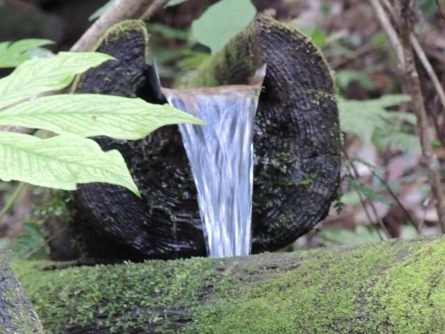 熊野の清水。名水百選に選ばれているらしい。 Clear Water Nikon P7700 at 熊野神社