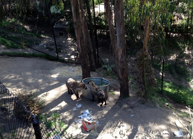 Oakland Zoo (31)