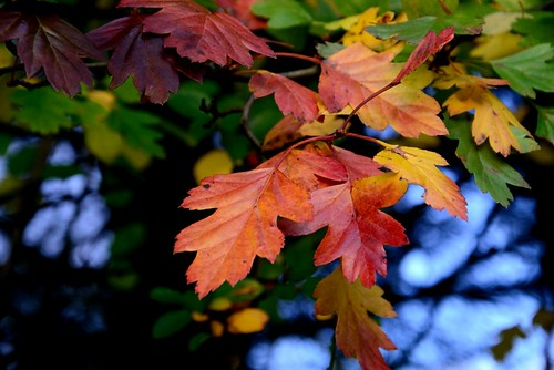 Herbstfarben by Alexandra Wirth