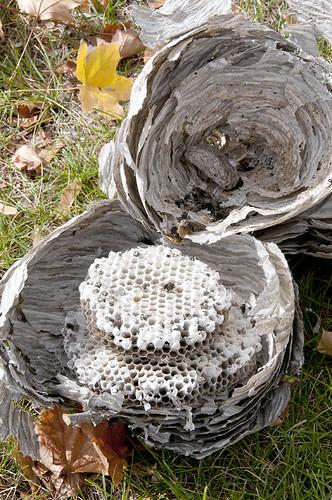 Nest 11