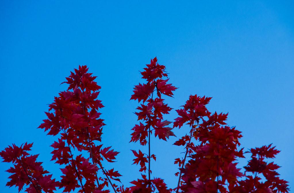 Blue Leaves Contrast