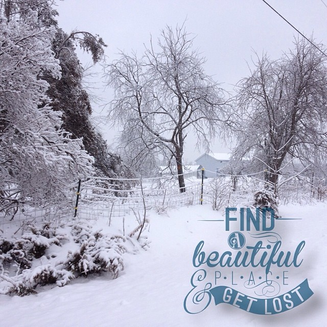 Dec 27 - snow {a lovely snowy landscape on my walk} #photoaday #snow #rhonnadesigns #princeedwardcounty #winter #tree