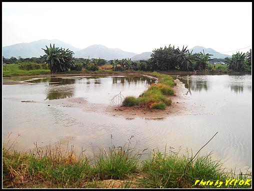 踩到腳軟 (第16回) 塱原濕地觀荷 @ dvcamtrv900的Blog :: 痞客邦