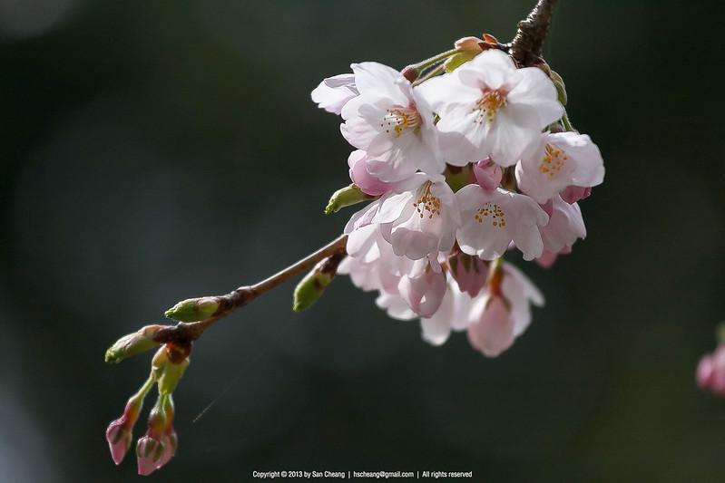 恩賜日本庭園