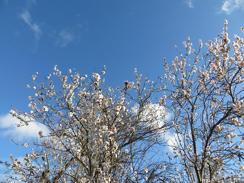 almond in the sky