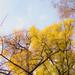 Alberi d'autunno