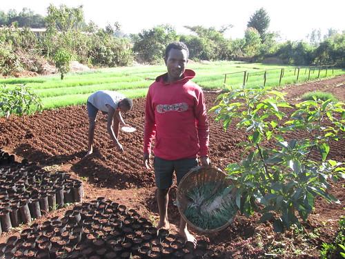 A customer purchasing vegetable  seedlings  at the nursary (Photo: ILRI\ Yigzaw Dessalegne)