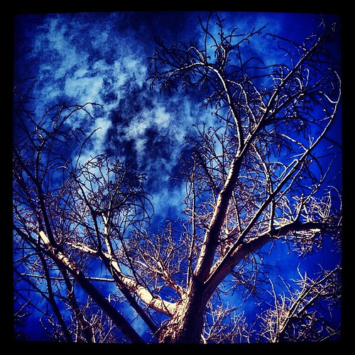 My cottonwood looking winter perfect by @MySoDotCom