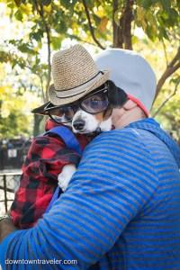 Halloween Dog Costume_Hipster Dog_Ragu_Dachshund 2 ...
