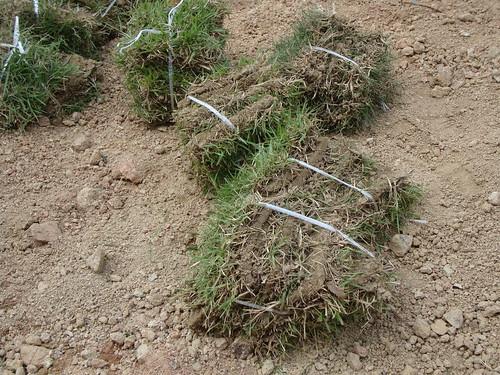 Grasssoden by Jens-Olaf